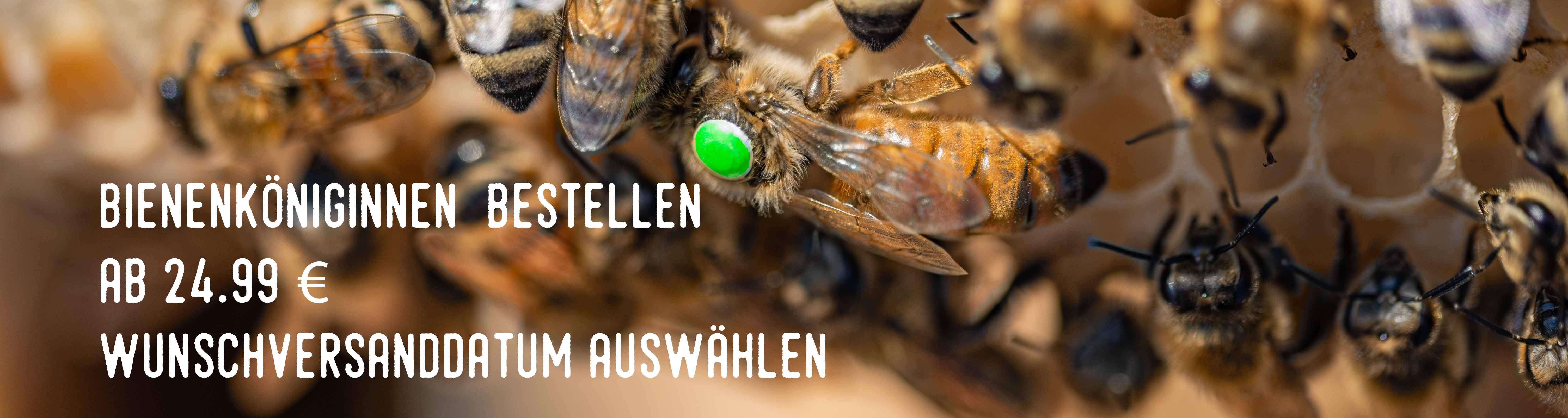 Bestellungen Bienenköniginnen